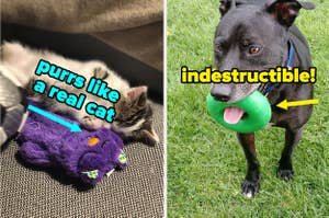 L: cat snuggling with purple purring cat toy R: dog with green chew ring in its mouth