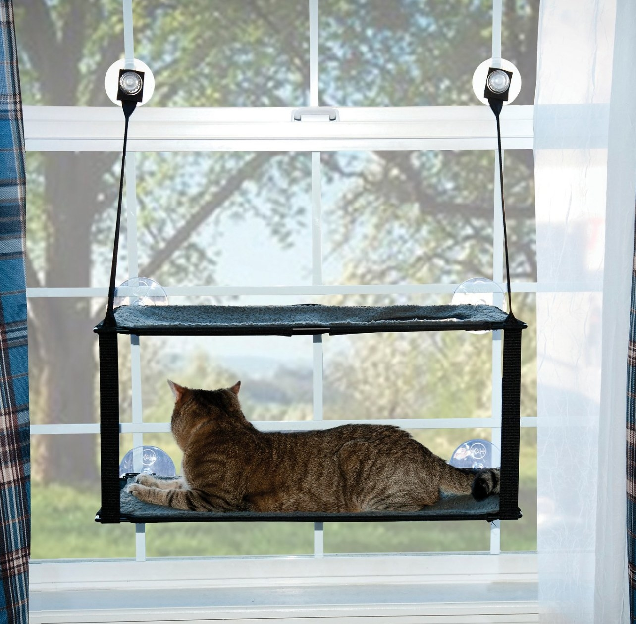 cat sitting in a window perch looking out the window
