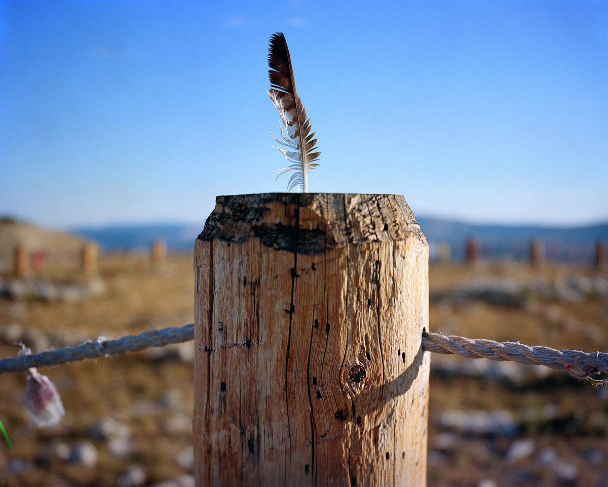 Close-up of a feather atop a tree stump