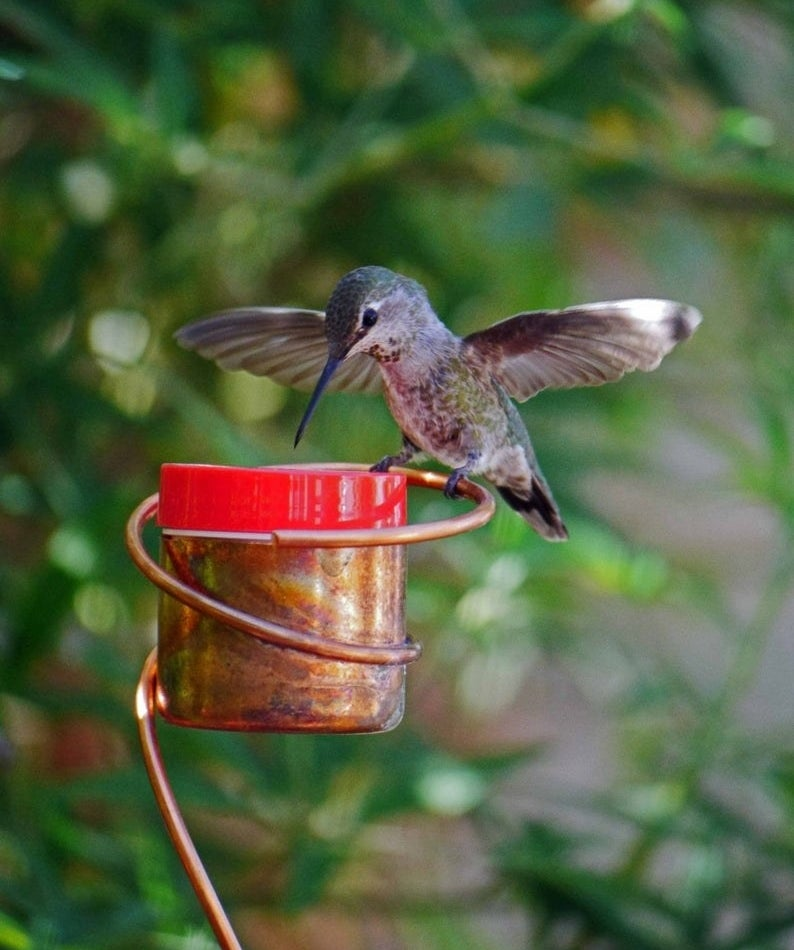the cooper feeder which is shaped like a cup attached to a stand with a humming bird perched on its lid