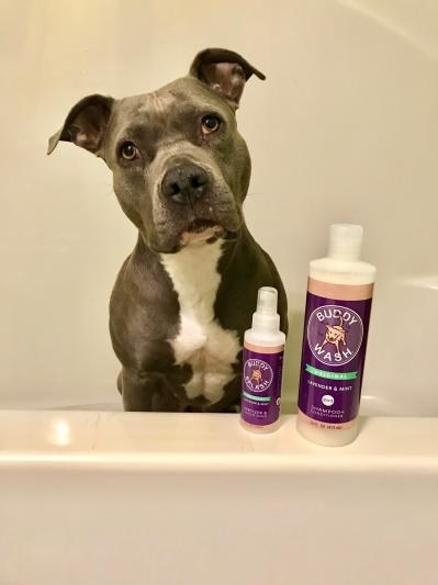 a dog in the bathtub with the wash