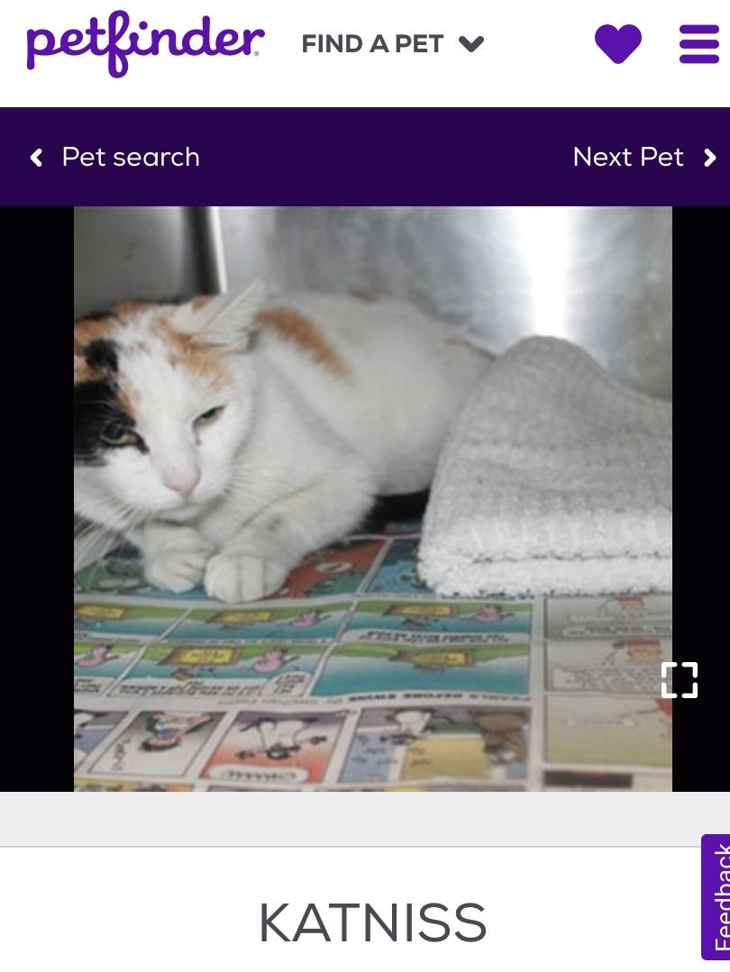 A screenshot of a white cat with brown spots and a name tag underneath