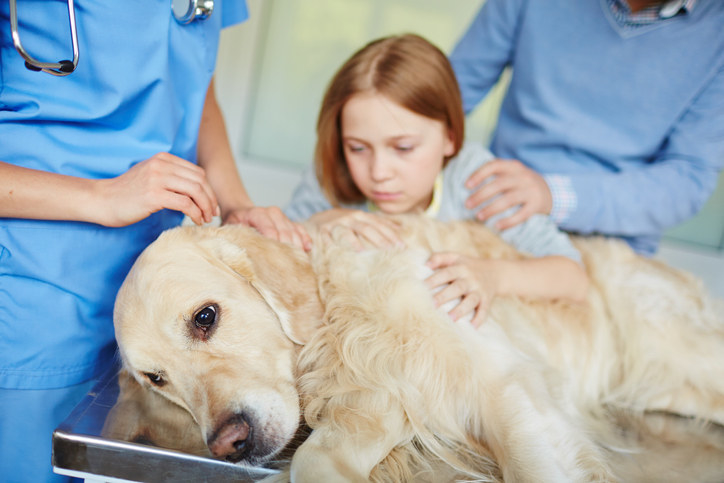 Dog lying on a vet table and a girl holding him worriedly