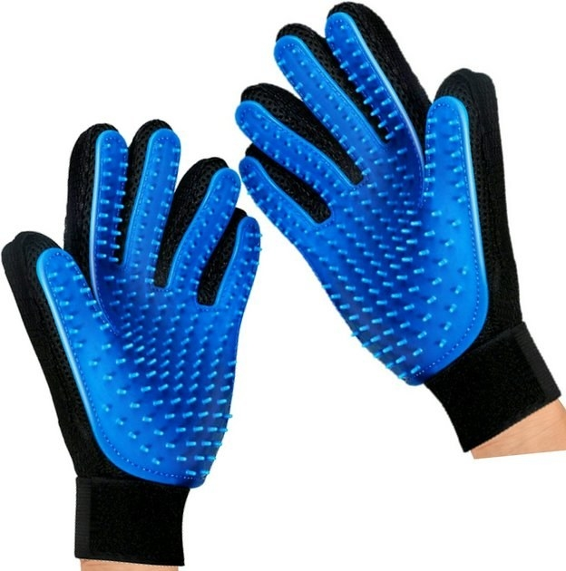 The blue pair of grooming gloves on a person's hands