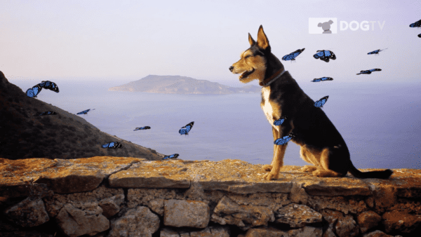 A dog sitting on a stone ledge with blue butterflies flying around them