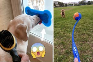 A split thumbnail of a dog licking a pad and a Chuck It ball launcher
