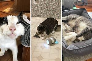 A split thumbnail of three cats
