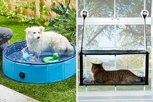 a dog playing in a collapsible pool; a cat sitting in a window perch