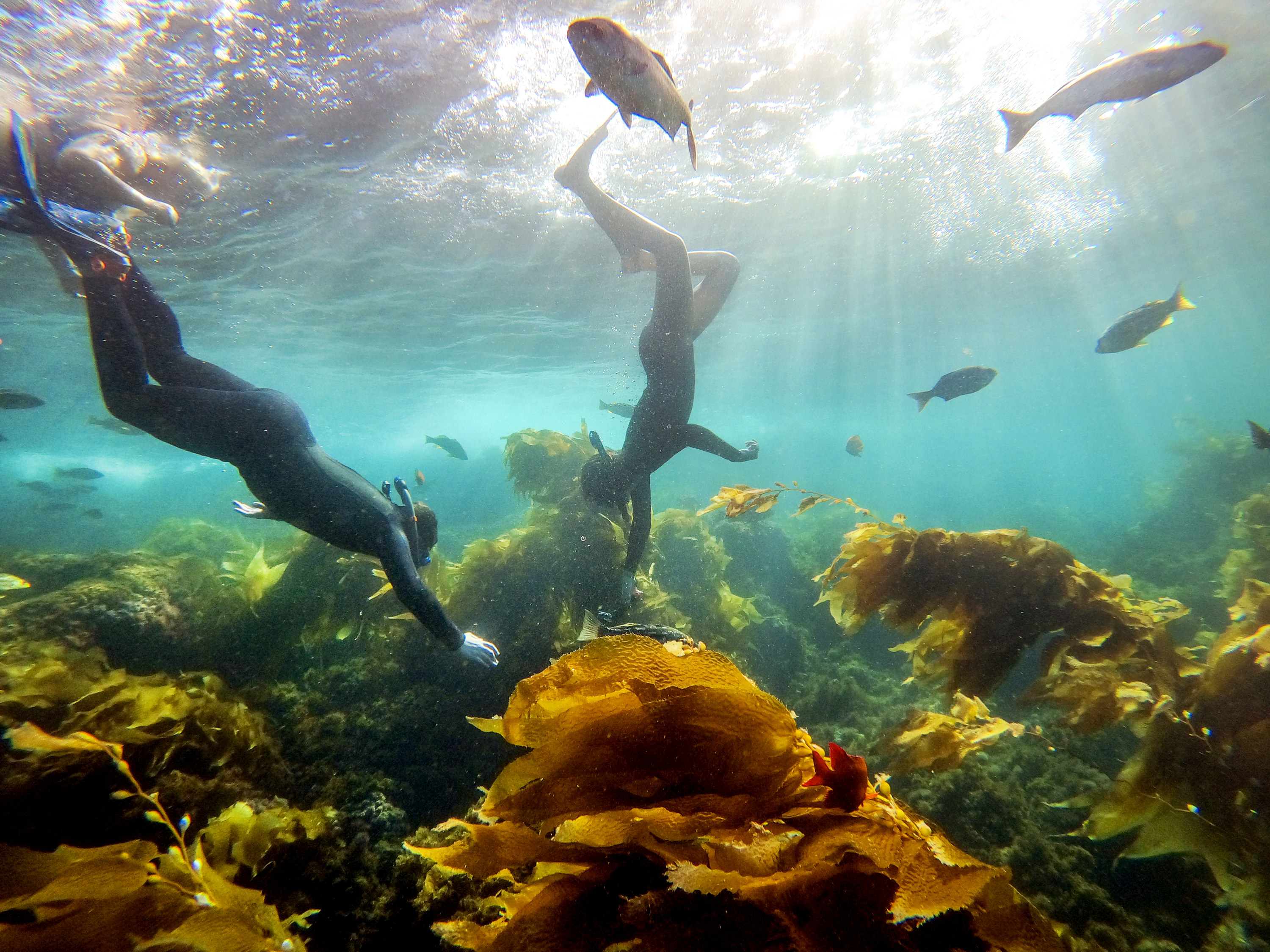 Snorkelers and fish swim in the water
