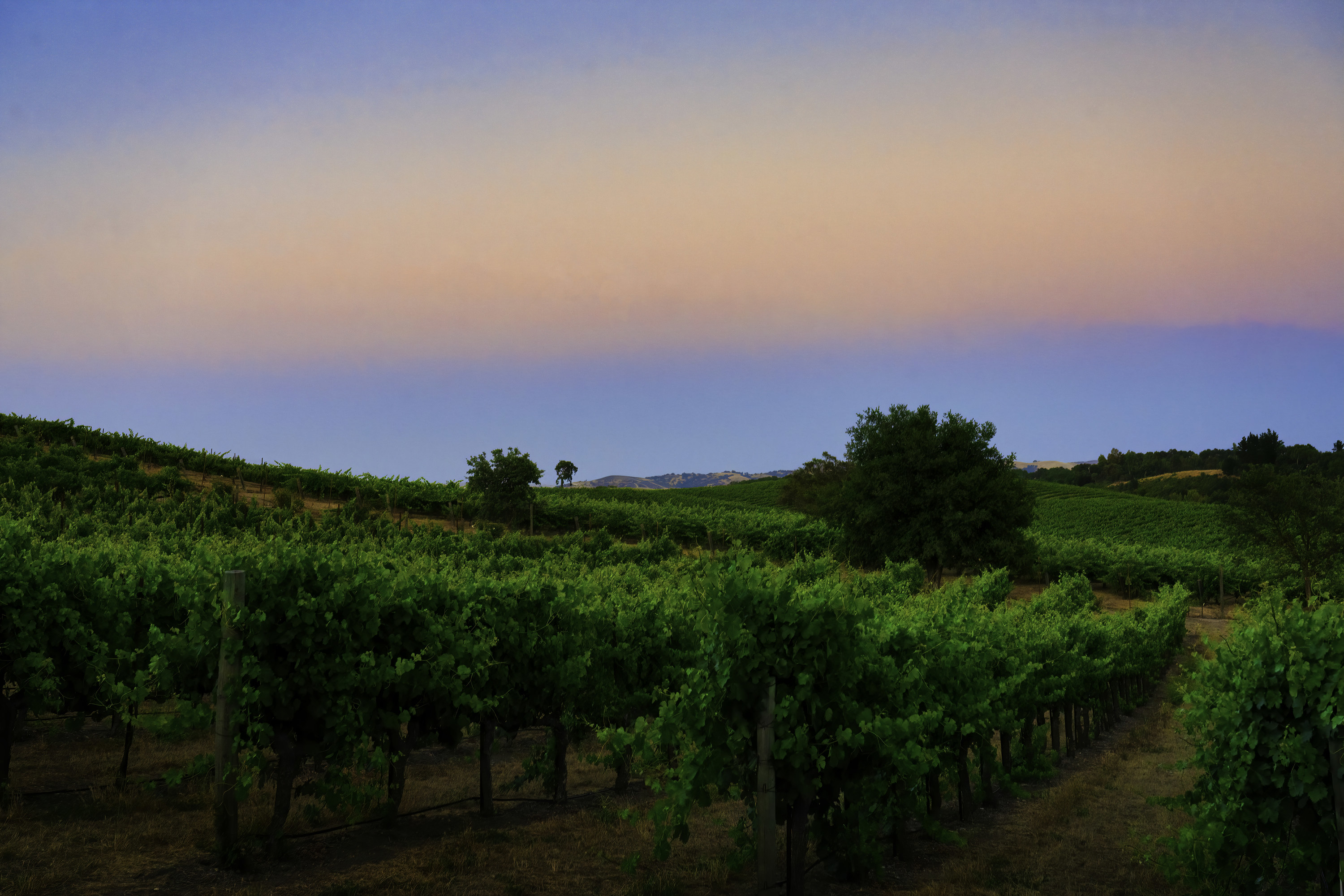 Pelletiere Estate Winery at Twilight, Paso Robles, California, United States.