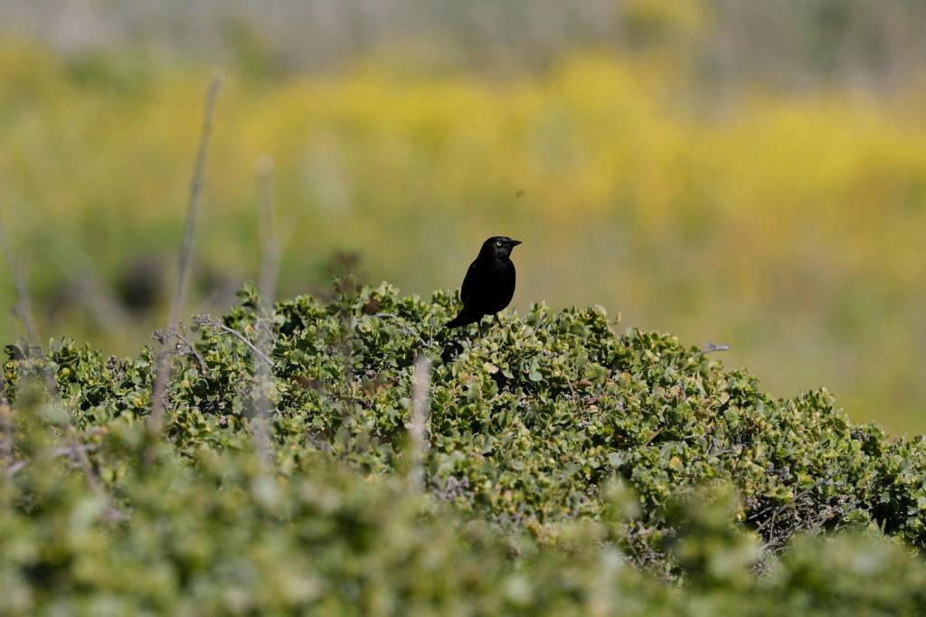 A bird sitting on greenery