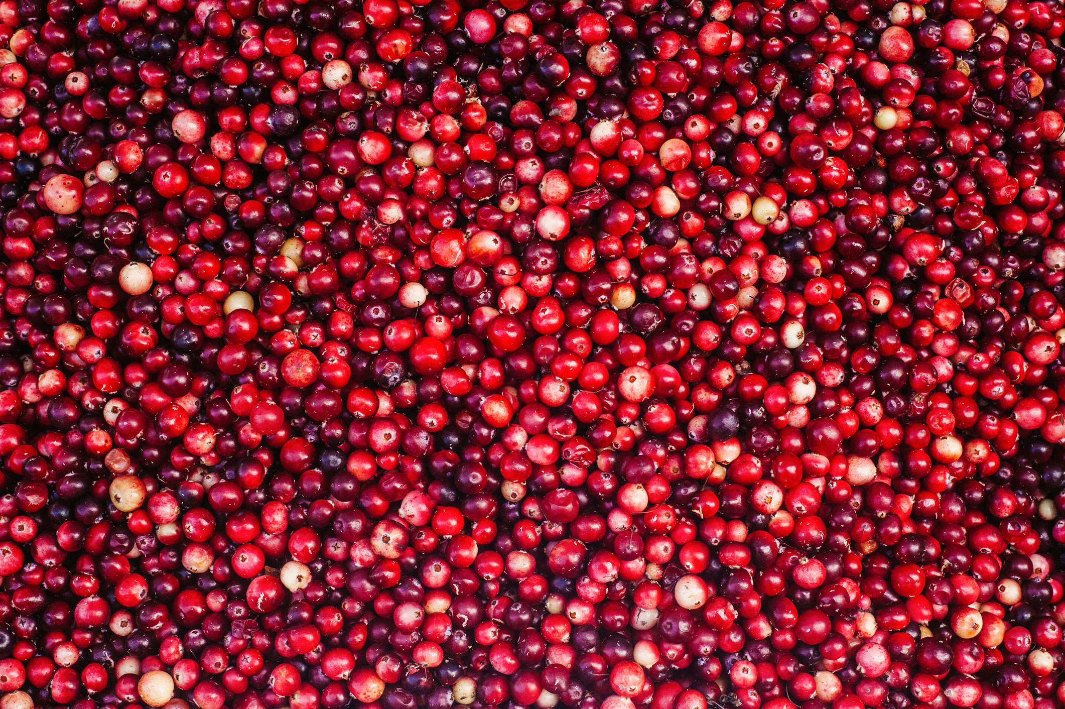 lots of cranberries