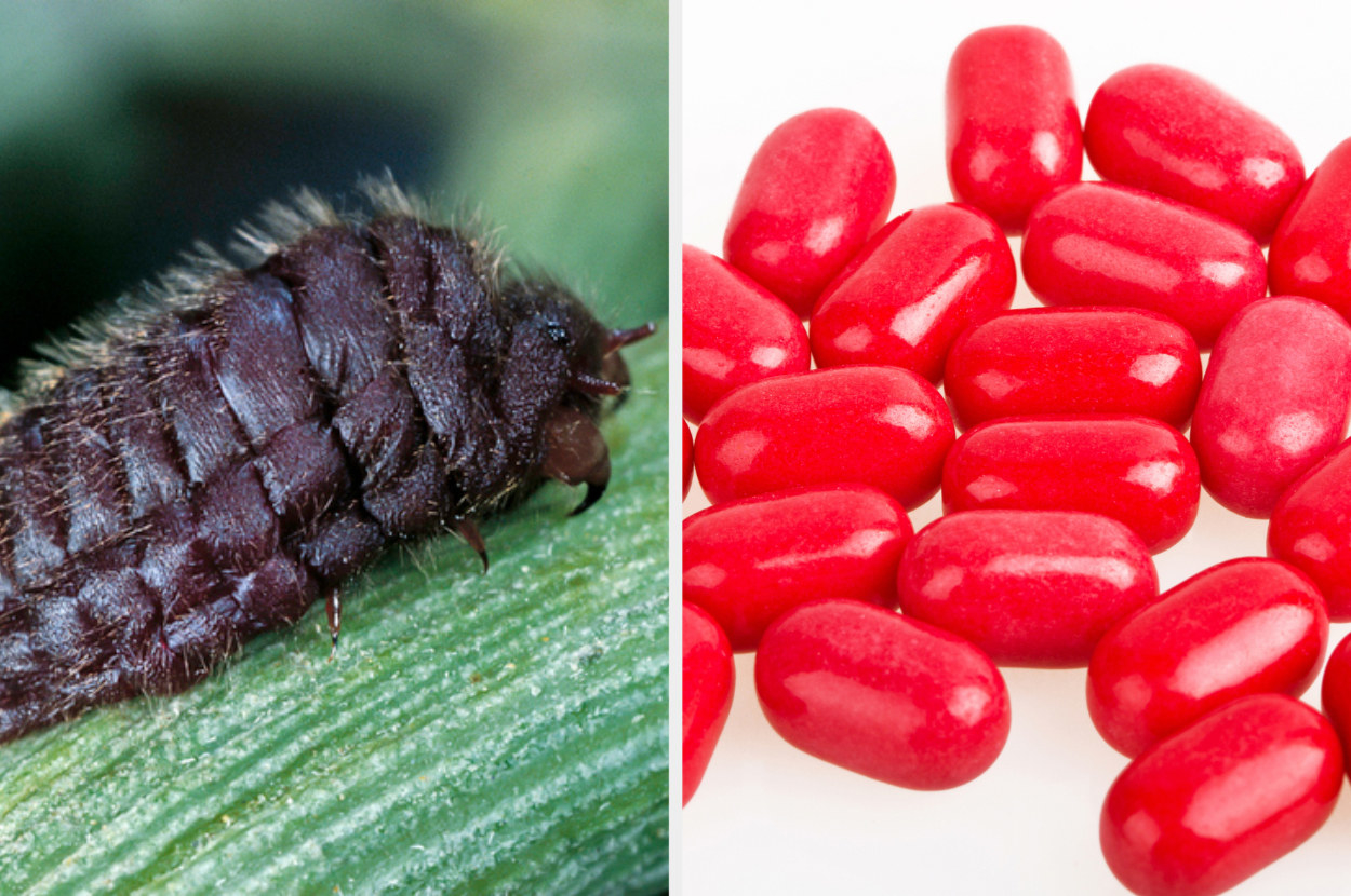 a cochineal insect, next to red candies