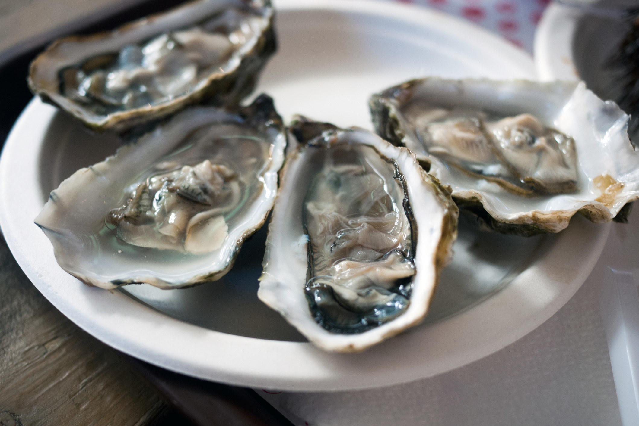 plate of raw oysters