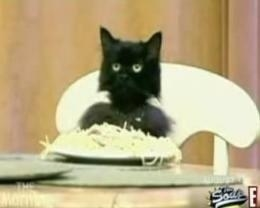 Screenshot of a black cat eating spaghetti sitting at a table