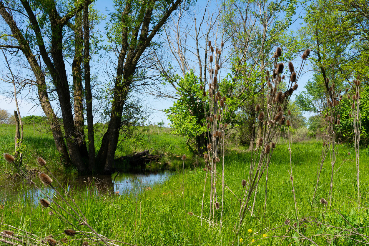 A scenic picture of Midewin National Tallgrass Prairie in Illinois