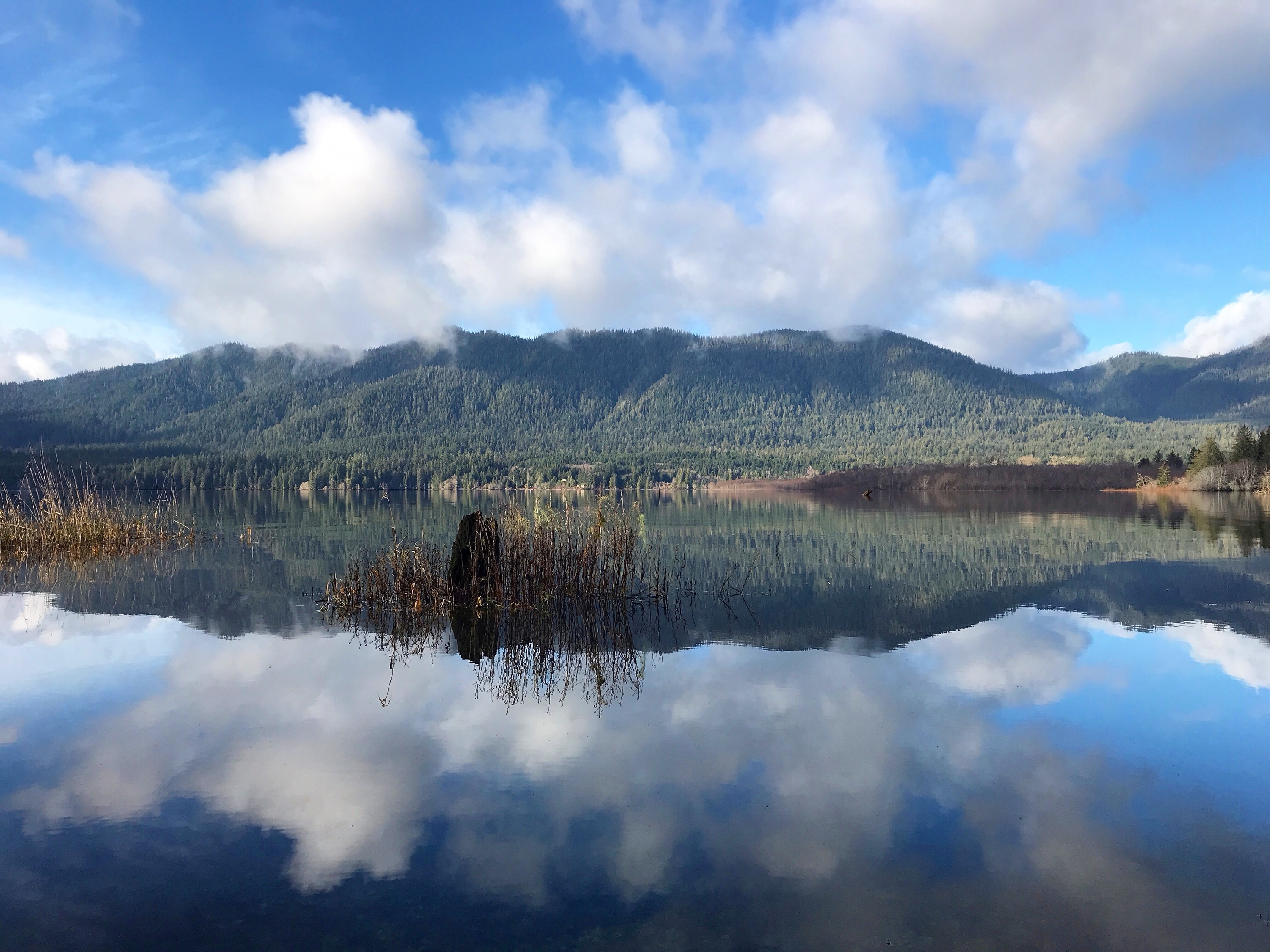 View ofLake Quinault with mountains in background