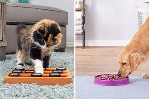 a cat playing with a puzzle toy; a dog eating from a puzzle bowl