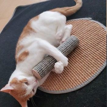 Cat holding cat kicker toy