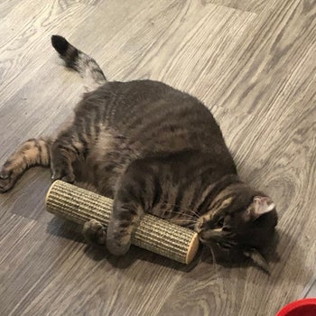 Cat playing with cat kicker toy