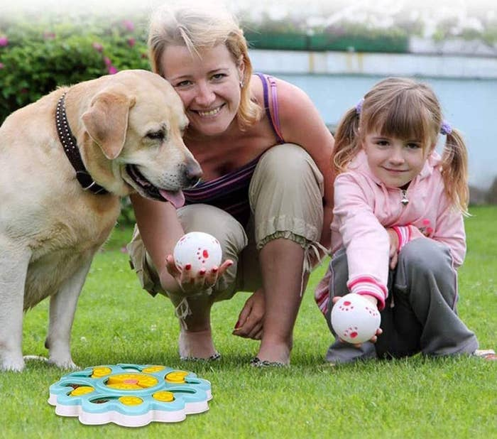dog with owners and feeder