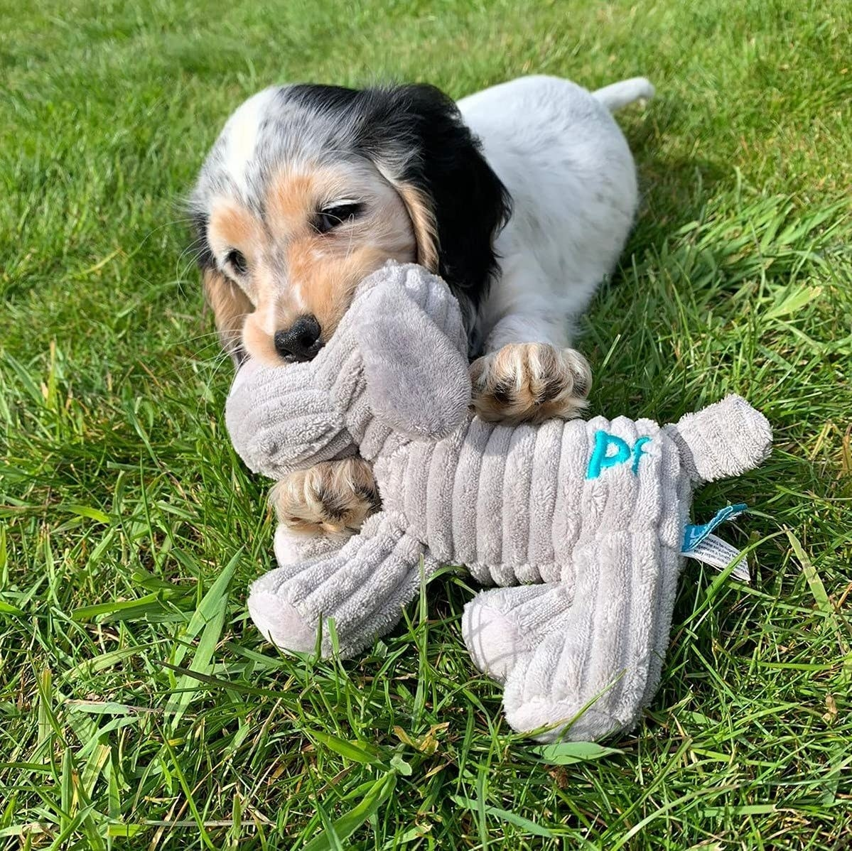 puppy playing with dog toy