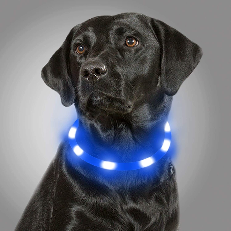 dog in light up collar