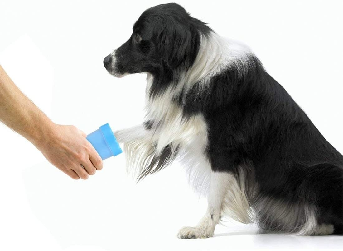 dog with paw washer