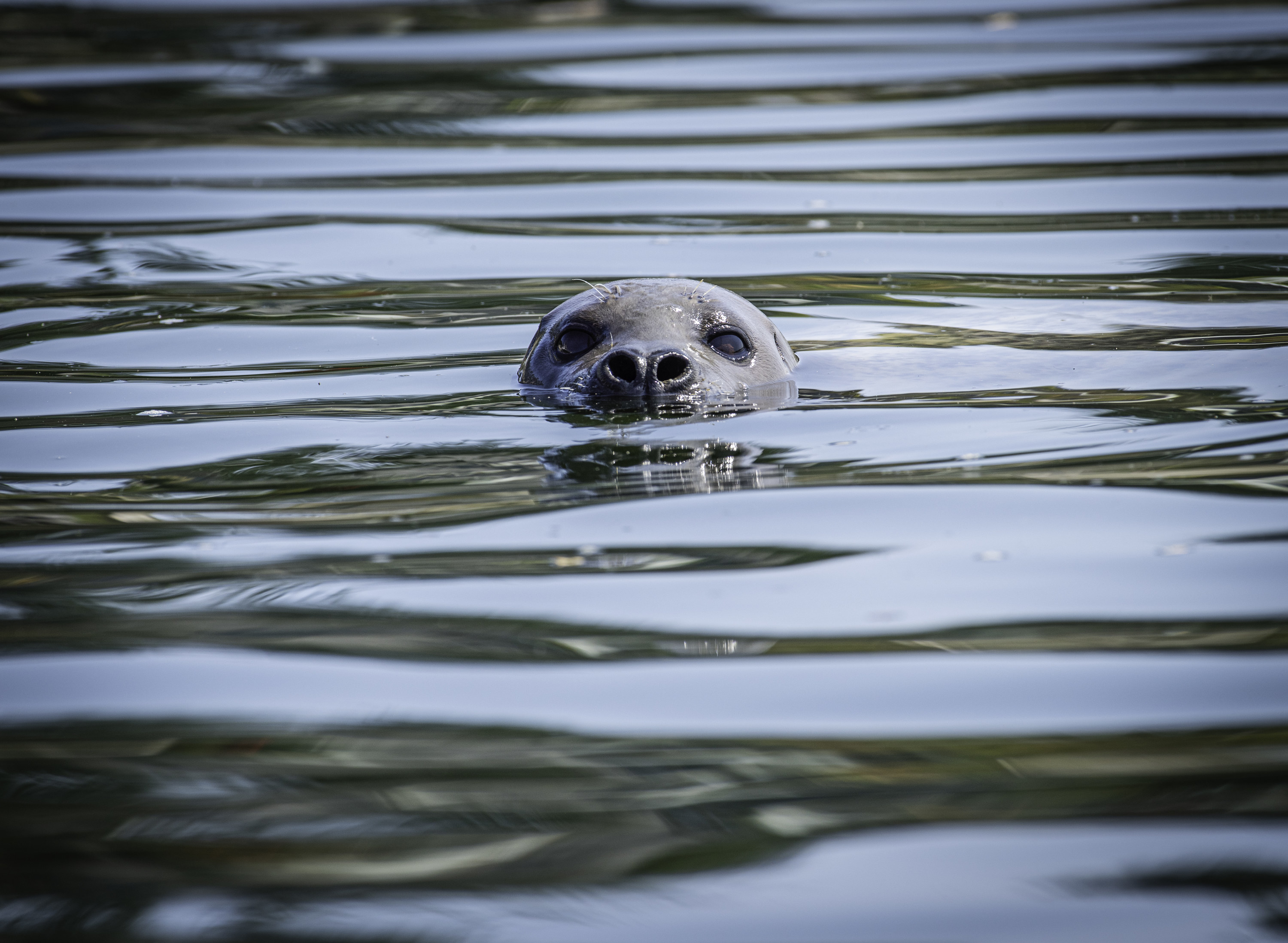 A sea animal emerging from the water