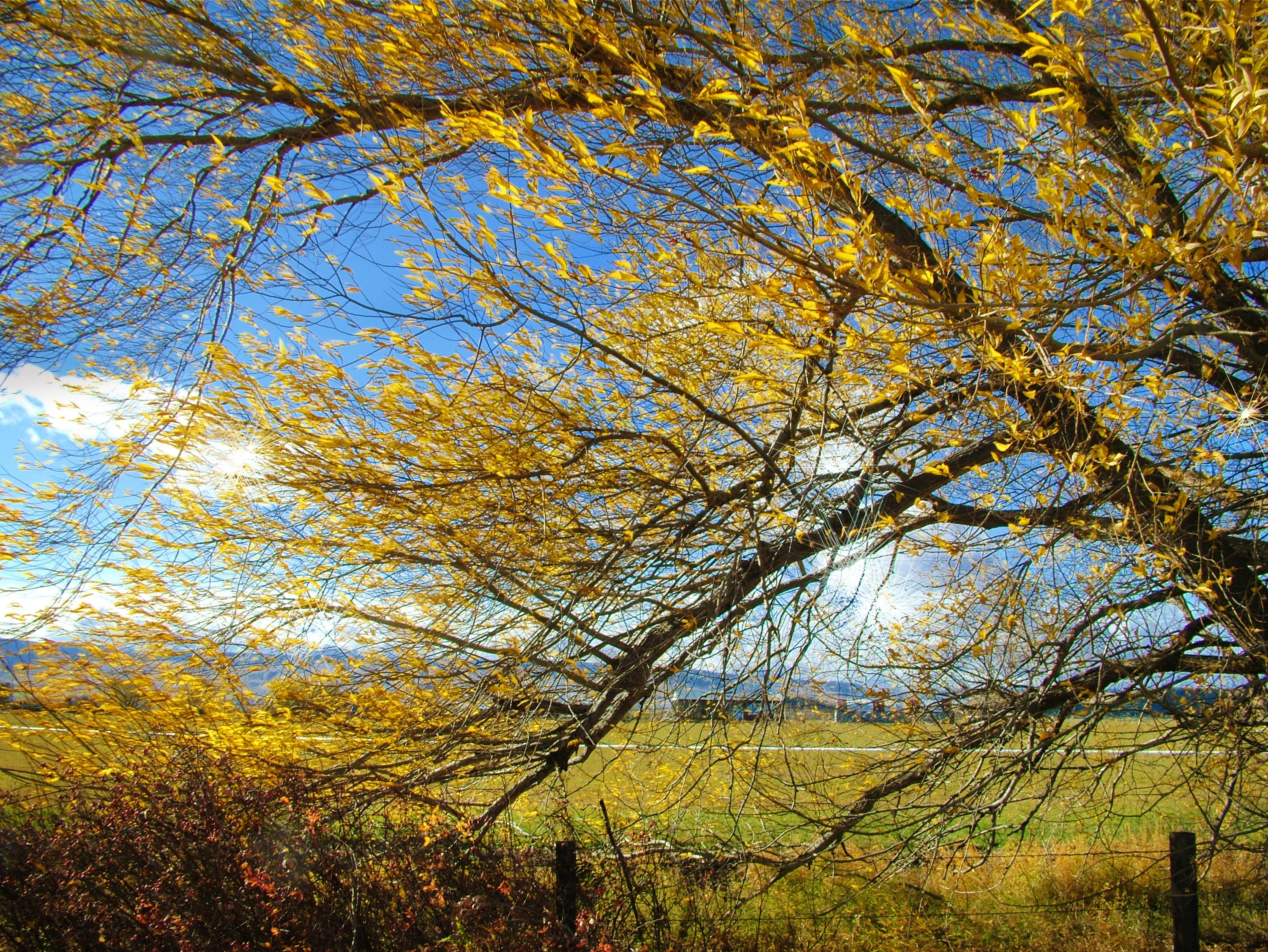 Photo of a yellow leaf tree