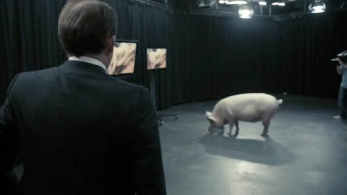 man in suit looks at pig