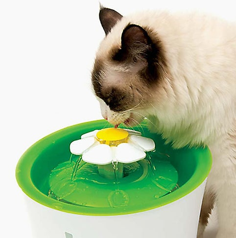Thecat flower drinking fountain