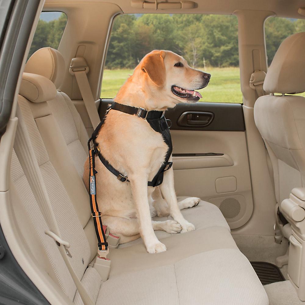 The seatbelt tether car restraint