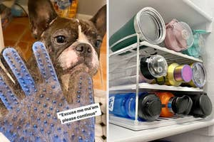 Frenchie and a grooming brush full of his hair and a water bottle organizer on a shelf