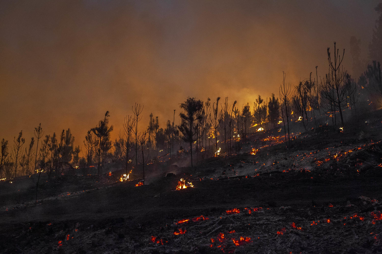 Fire burns trees on hillside