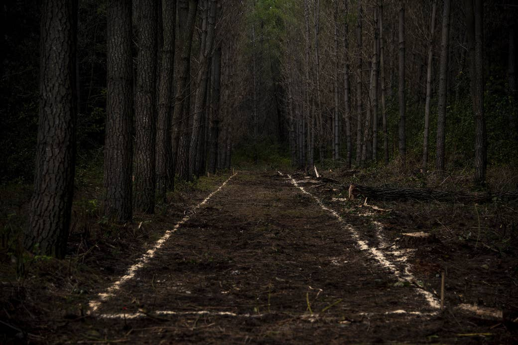 A forest with trees cut down