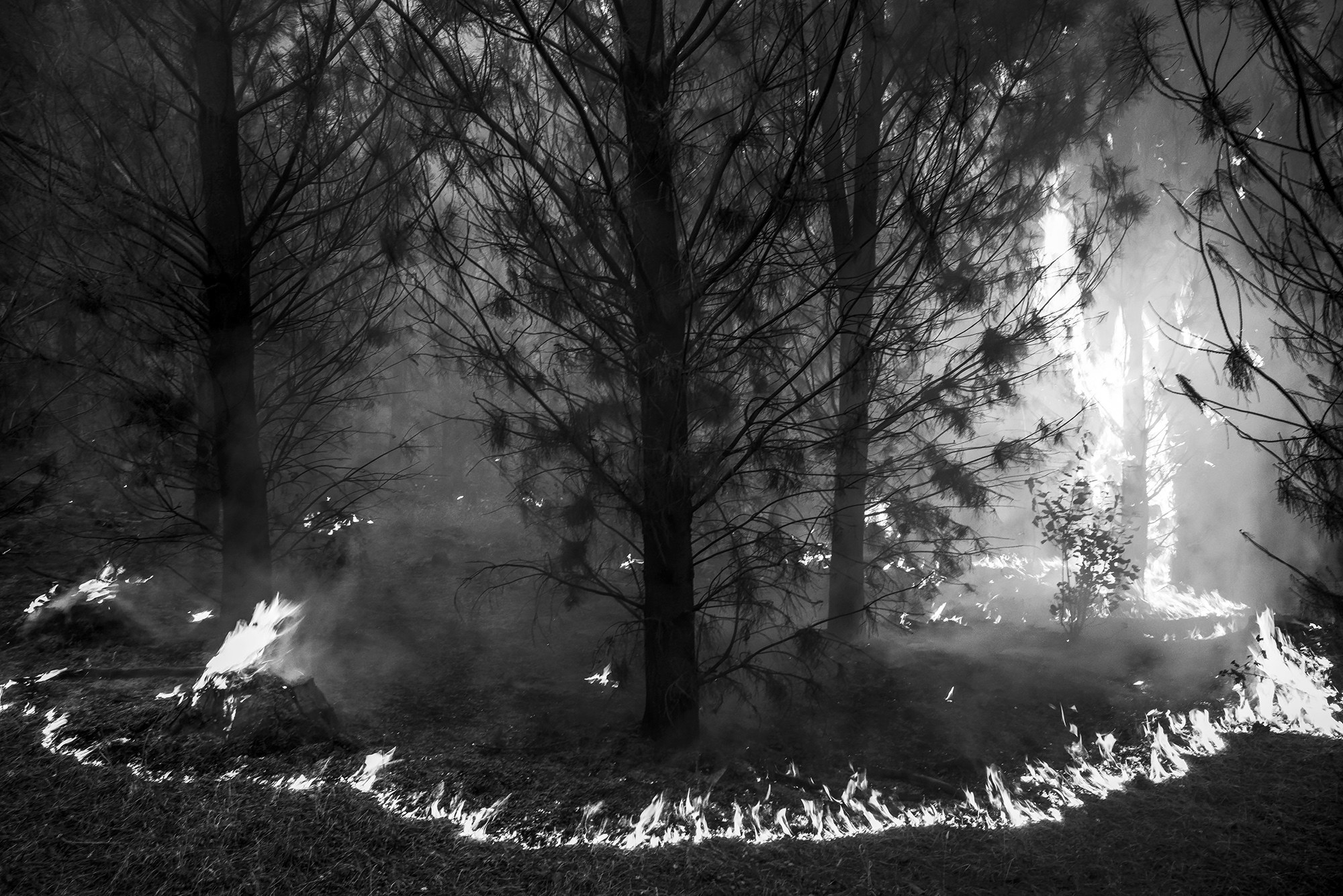 Ring of fire surrounds trees
