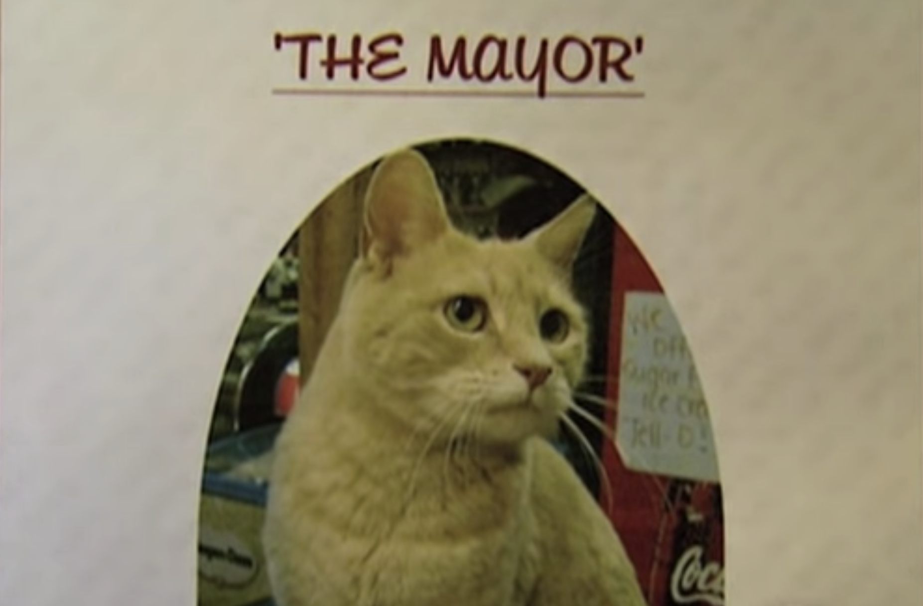 """A photo of a yellow cat with the text """"the mayor"""""""
