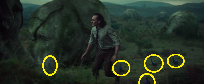 Loki running in front of peacocks