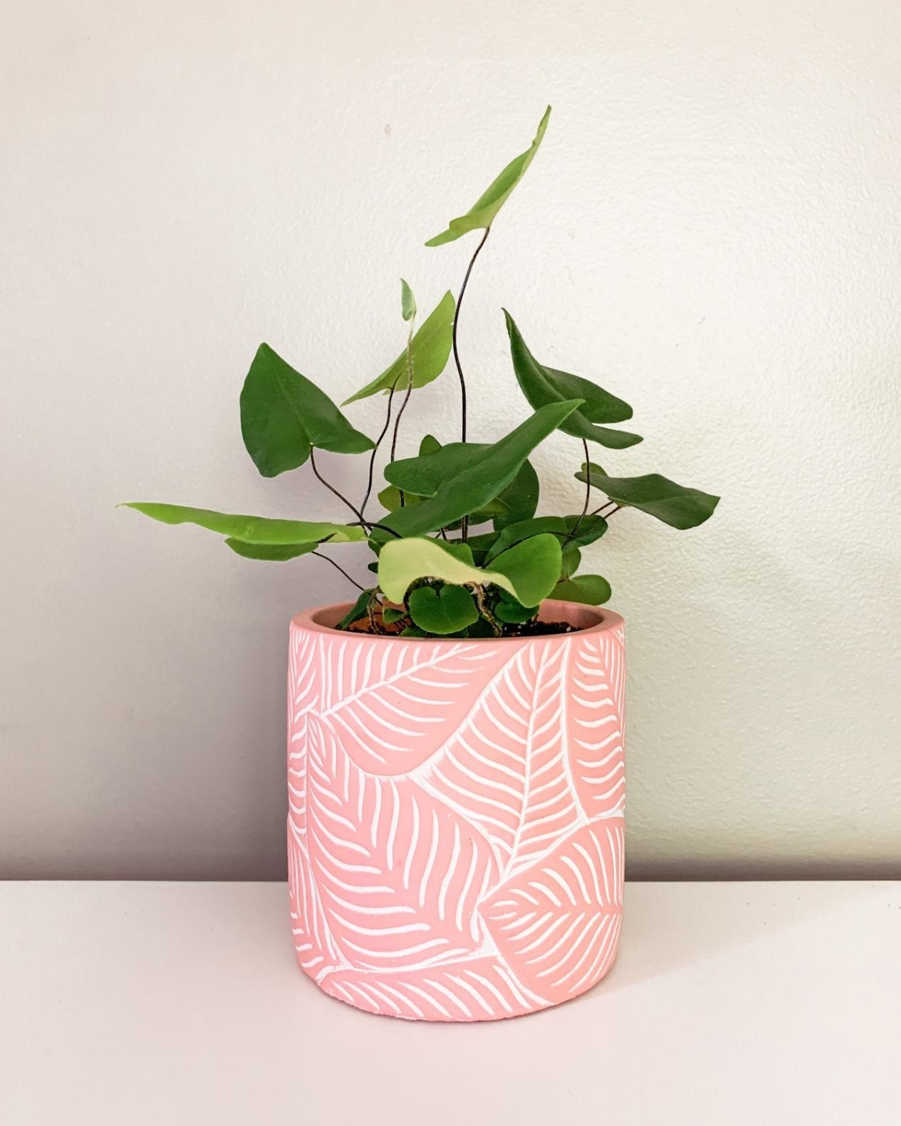 Reviewer's pink planter with etched leaves has a leafy plant in it