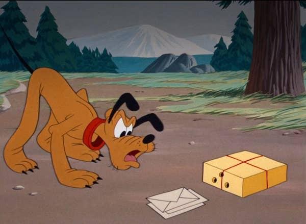 Pluto stares at a box