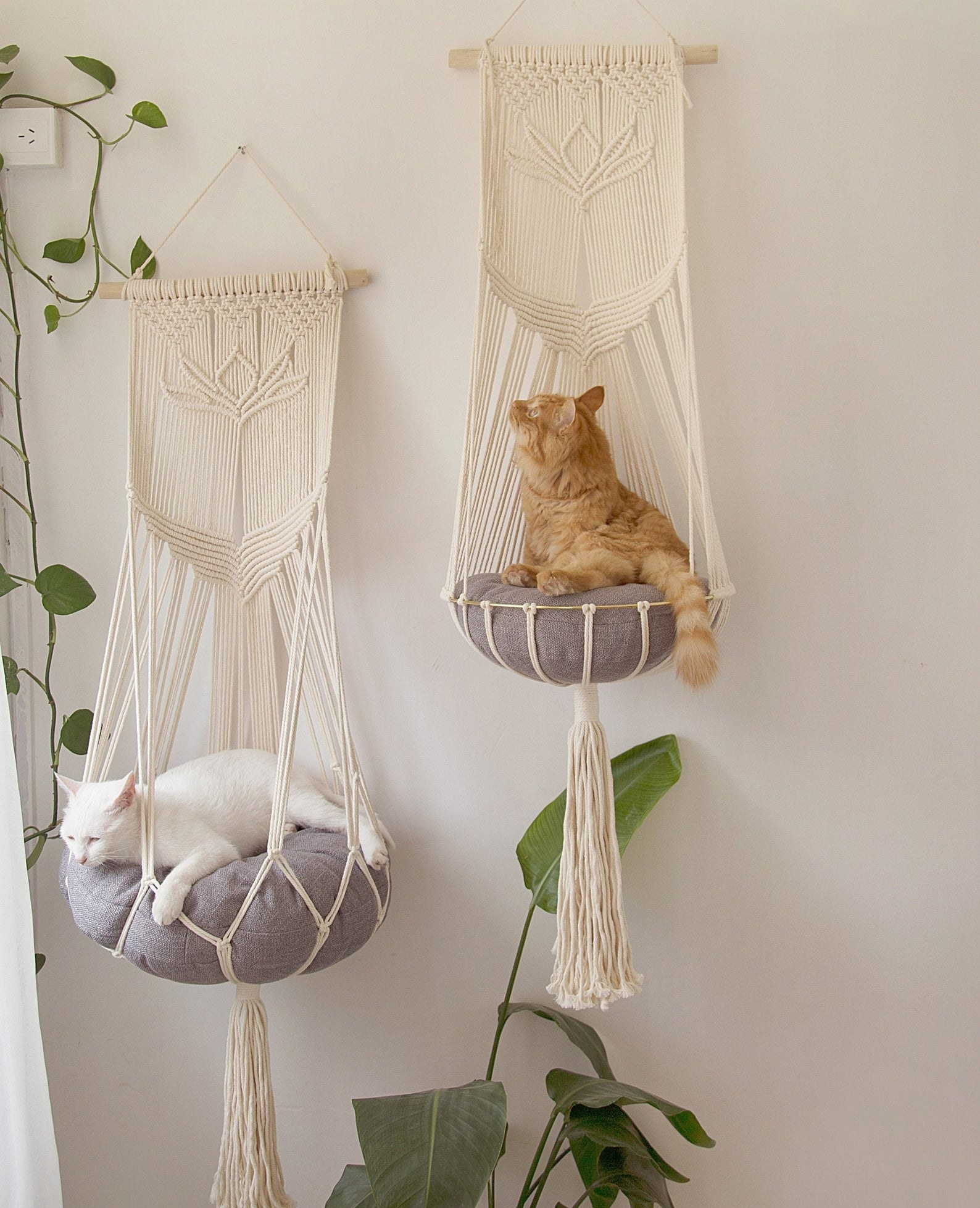 Two cats lounging on separate macrame hammock beds