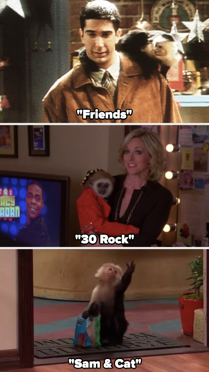 """Katie the monkey in """"Friends,"""" """"30 Rock,"""" and """"Sam & Cat"""""""