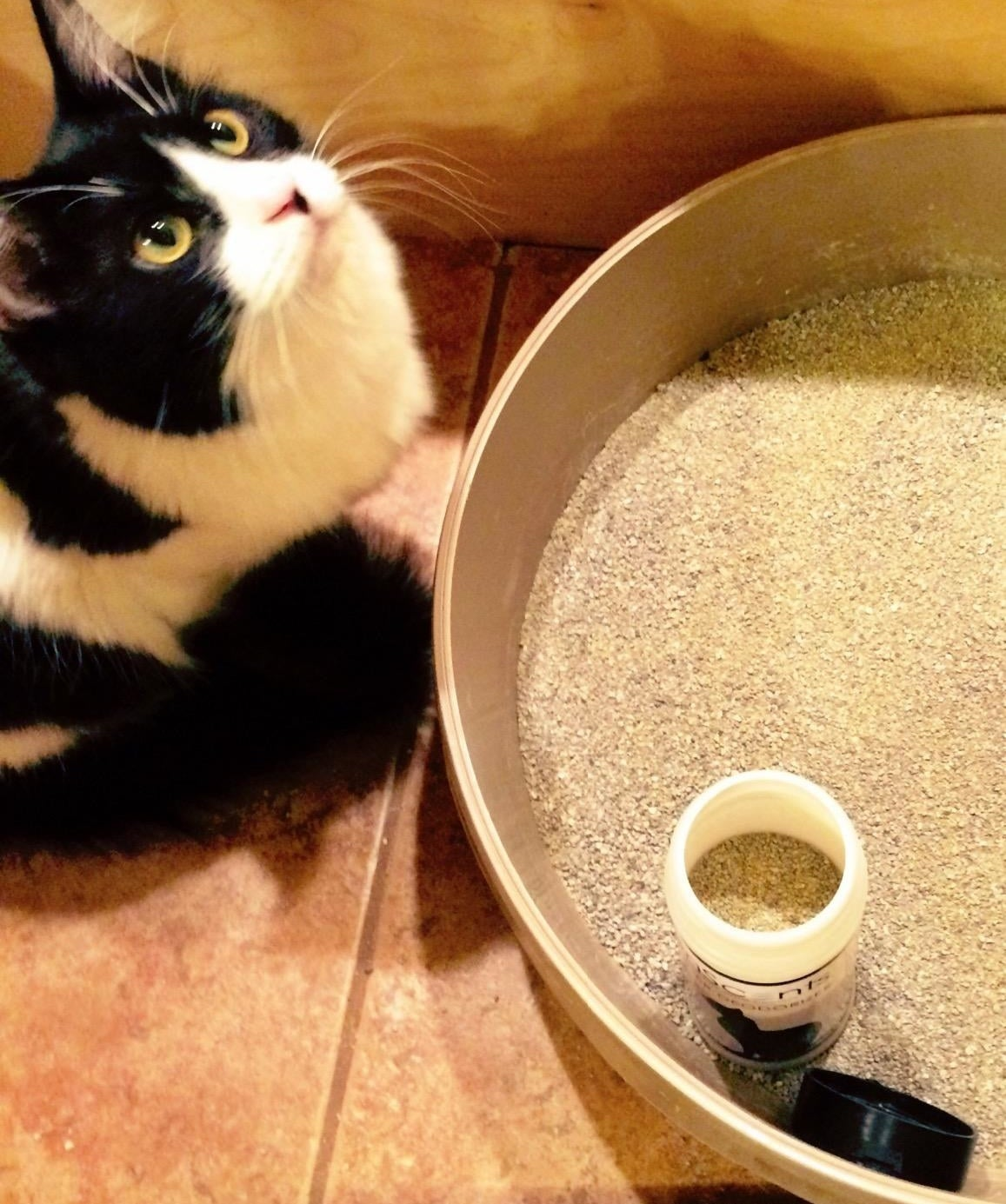 A reviewer photo of a cat looking up next to a litter box with a bottle of odor destroyer in it