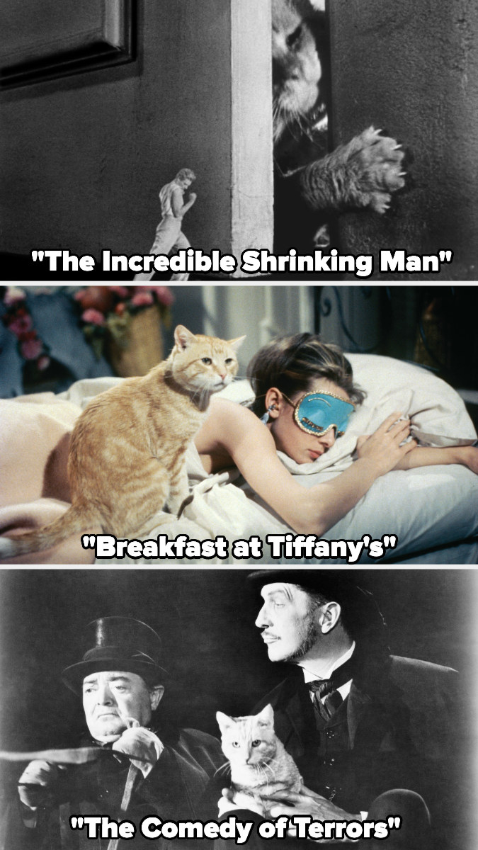 """Orangey in """"The Incredible Shrinking Man,"""" """"Breakfast at Tiffany's,"""" and """"The Comedy of Terrors"""""""