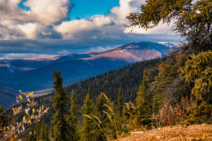 a shot of the mountains and trees in Yukon