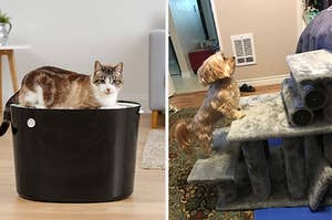 a top litter box and a set of pet stairs