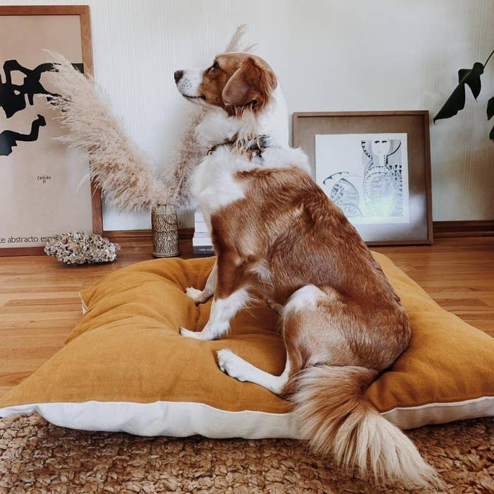 a large dog sitting on the ochre linen dog bed