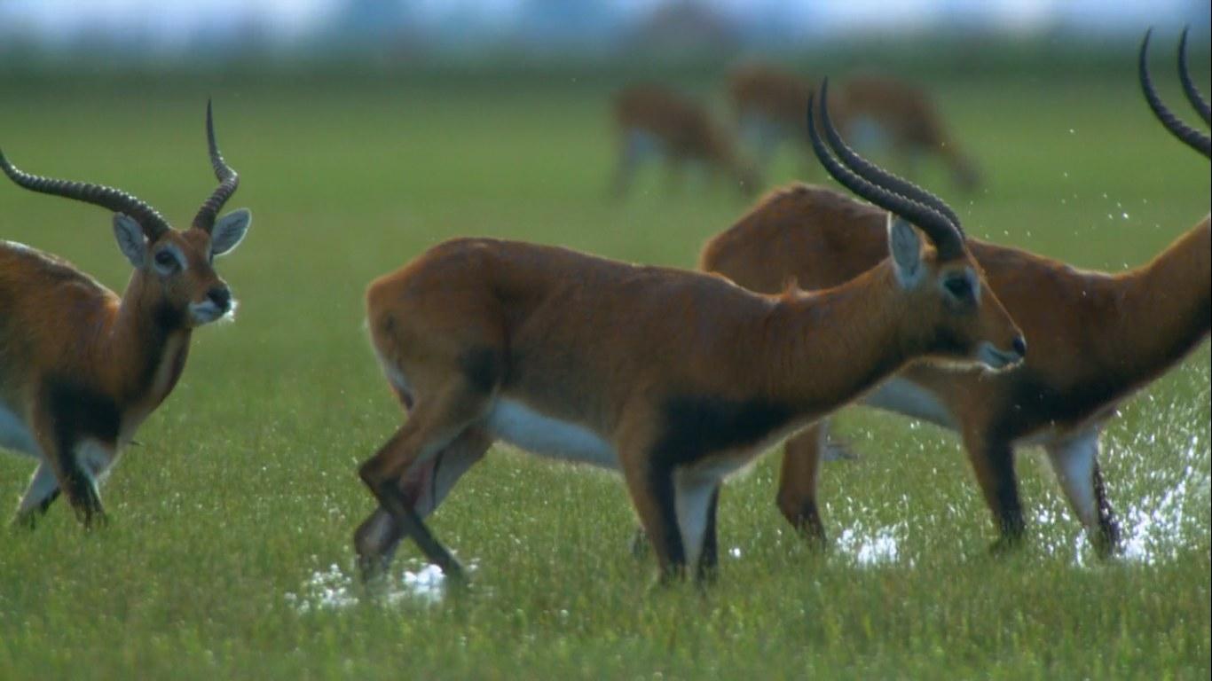 Antelope run across a plane