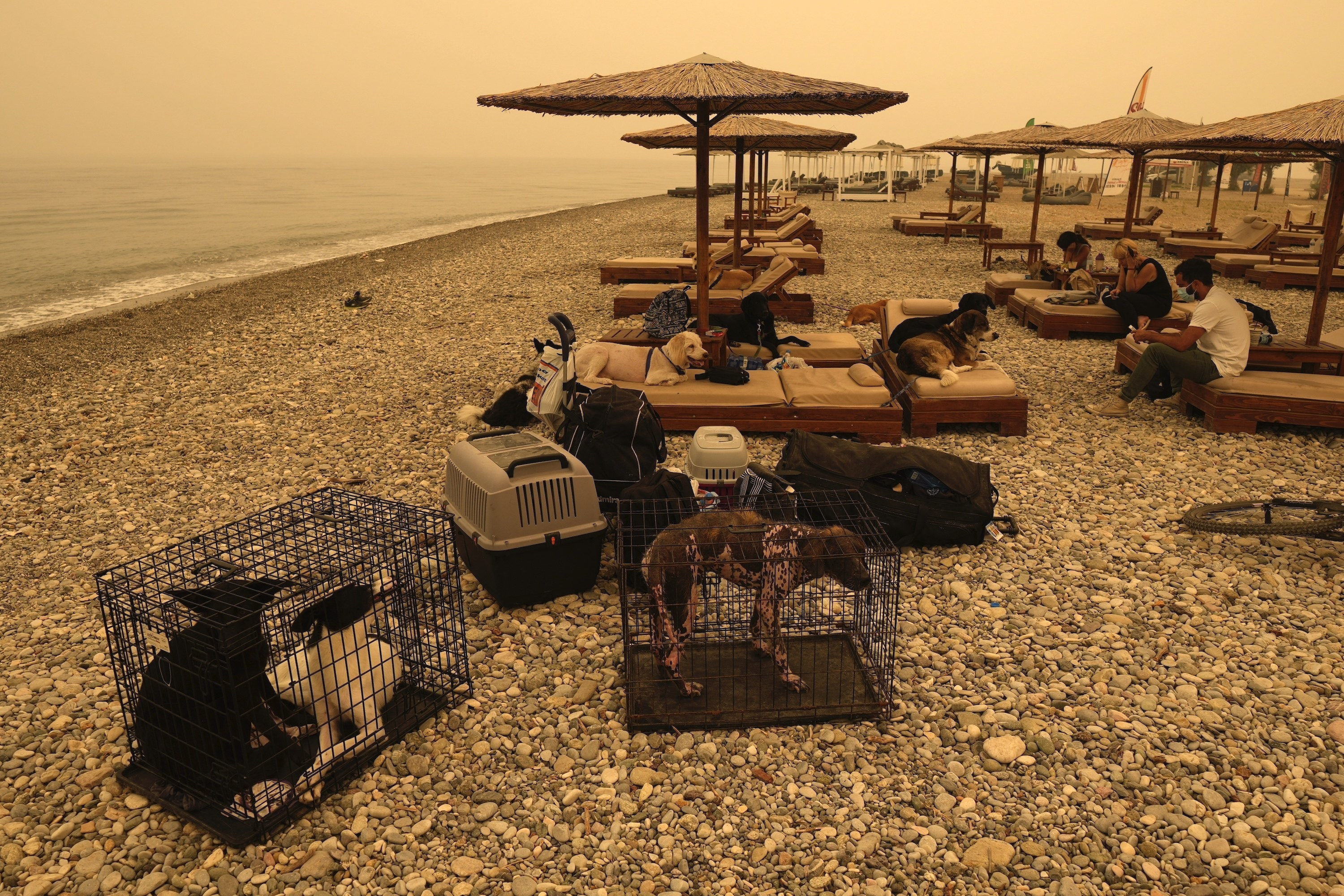 Dogs are contained in crates and lying on beach chairs on a rocky shore under a hazy sky